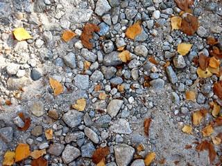 Cailloux et feuilles d'automne