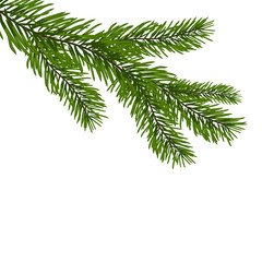 Green, realistic branch of fir. Fir branches. Isolated on white Christmas  illustration