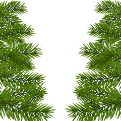 Green lush branch of spruce with the two sides. Fir branches. Isolated on white  illustration