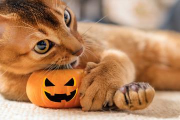 Cat plays with a Hallowe'en pumpkin