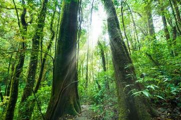 Amazing morning at deep rainforest with tropical plants and sunbeams. Nature landscape and travel background