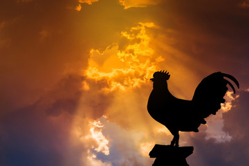 silhouette of rooster crow stand on in the early morning sunrise background