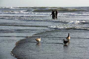 Trois goélands à Ocean Beach à San Francisco, USA