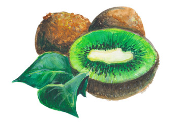 тропический фрукт киви