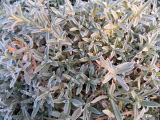 autumn flowers: chickweed, background