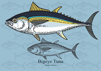 Bigeye Tuna. Vector illustration for artwork in small sizes. Suitable for graphic and packaging design, educational examples, web, etc.