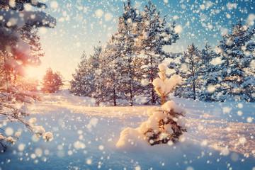 Foto op Plexiglas Blauwe jeans Beautiful tree in winter landscape in late evening in snowfall