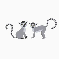two wild lemur on white background illustration