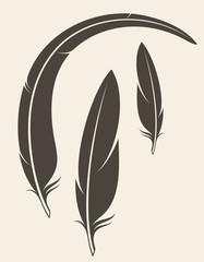 Black feathers. Vector illustration