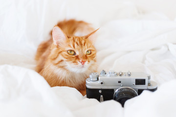 Cute ginger cat with old fashioned camera on white background. Place for text.