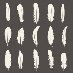 Vector group of feather. Silhouette set icons