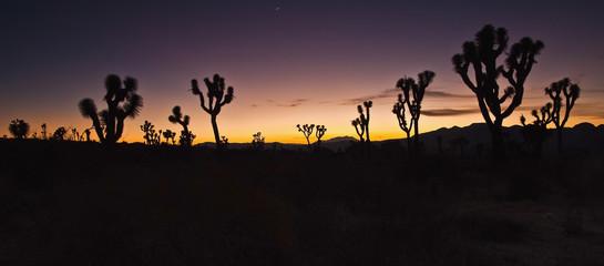 Sunrise in joshua tree national park in winter;California united states of america