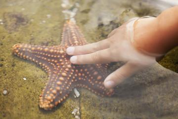 A child's hand touching a starfish;Gold coast queensland australia