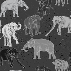 Seamless pattern with wild elephant