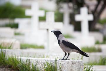 A bird sits on a tombstone;Jerusalem israel