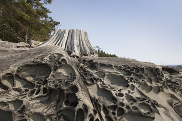 Weathered driftwood and sandstone lace rock formations on portland island;Gulf islands british columbia canada