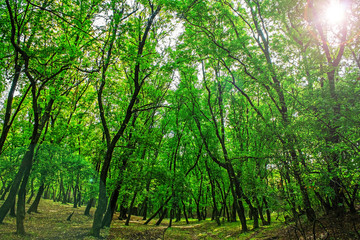 green grove in autumn, nature background