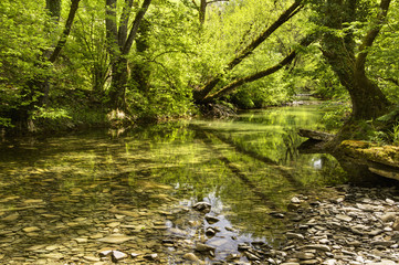 Trees reflected in clear shallow water in a woodland river;Zagoria epirus greece
