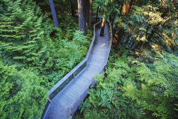 Trail in the forest at the Capilano Suspension Bridge; Vancouver, British Columbia, Canada