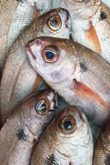 Fresh Caught Fish; Tarifa, Cadiz, Andalusia, Spain