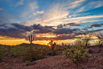 Wall Murals Drought Arizona desert sunset