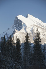 Snow covered mountain peak with silhouetted evergreen trees in the foreground and blue sky; Banff, Alberta, Canada