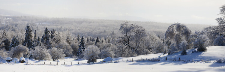 Trees and meadow after freezing rain or ice storm; Waterloo, Quebec, Canada