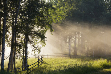 Early morning fog with sunlight streams coming through the forest with a wooden fence and grassy field; Alberta, Canada