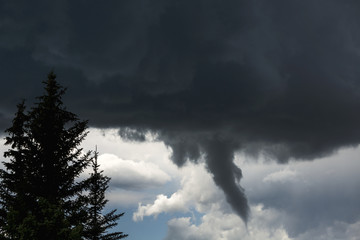 Dramatic funnel cloud created in dark storm clouds with silhouetted evergreen trees; Calgary, Alberta, Canada