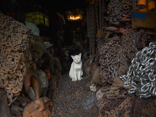 White cat in a chain shop; Bangkok, Thailand