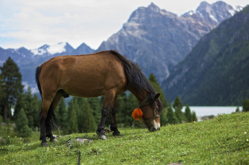 Horse grazing on grass field with lake and mountain range in the background; Ganze, Sichuan, China