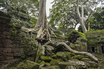 Ta Prohm, impressive temple in Angkor area built in the 12th Century; Siem Reap, Cambodia