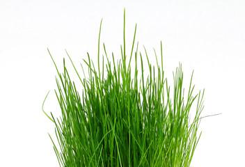 A pot with green grass.