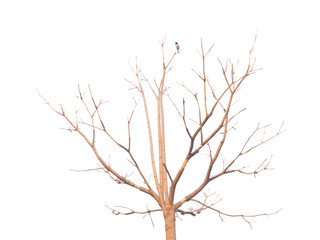 Deciduous tree with a bird clipping on white background