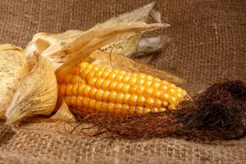 Початок кукурузы на мешкавине