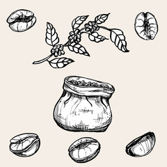 hand drawn coffee beans, sketch of branch coffee. vector drawing