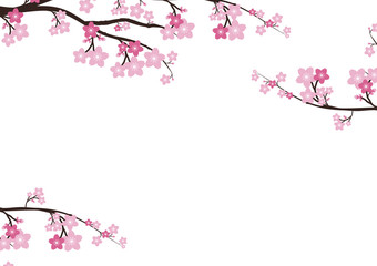 Cherry blossom flowers background. Sakura  pink flowers  backgro