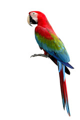 Fotobehang Papegaai Green-winged Macaw parrot, beuatiful multi colors birds with red
