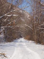 Forest road in the winter afternoon