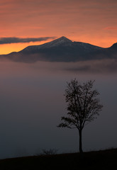 Lonely tree on background of sunrise in mountains