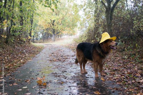Hund Mit Regenhut Im Herbst Macht Einen Spaziergang Stockfotos Und
