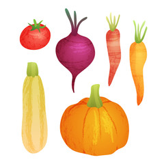 Cute vector vegetable collection on white isolated background. Organic food autumn set with pumpkin, carrot, squash, tomato and beetroot.