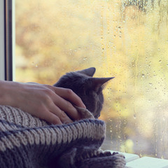 cozy meeting of the autumn season/ man stroking a cat sitting in a warm blanket on the background wet from rain window