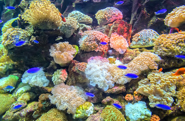 Coral ecosystems aquarium beautiful colorful