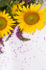 beautiful sunflower and purple wild sage isolated on white