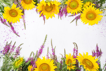 Frame by beautiful sunflowers and purple wild sage isolated on w