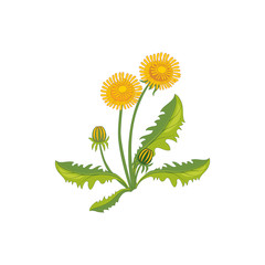 Dandelion Wild Flower Hand Drawn Detailed Illustration