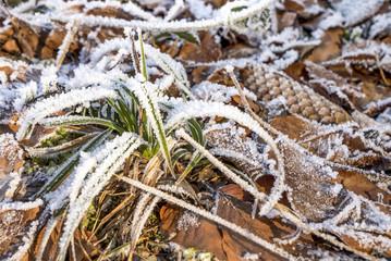 Mit Eis und Schnee überzogener Waldboden