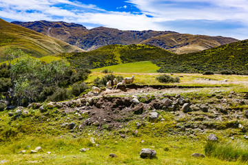 panoramic view of typical landscape with meadow and stones in new zealand