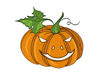 Pumpkin . Vector illustration on white background